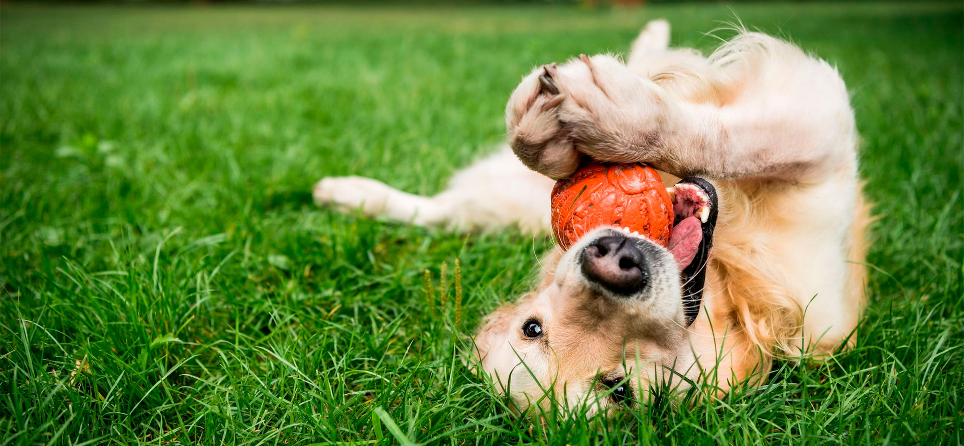 Ball for Your Dog.