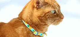 Beautiful cat collar.