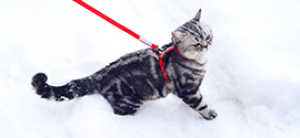 Cat Harness.