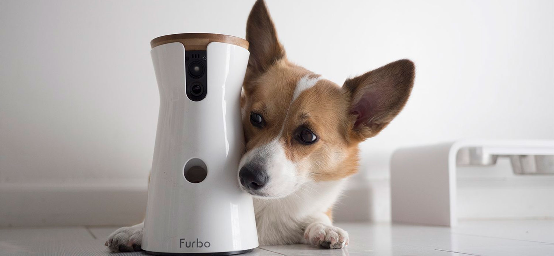 Dog Camera with Motion Sensors.