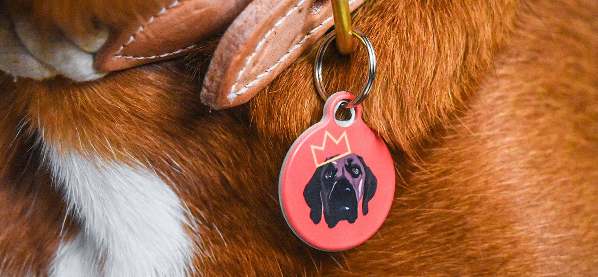Cute dog tag.