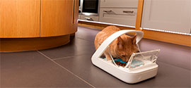 Automatic Cat Feeders.