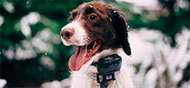 Dog Training Collars.