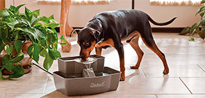 Dog Water Fountains.