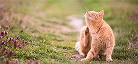 Flea Treatments for Cats.
