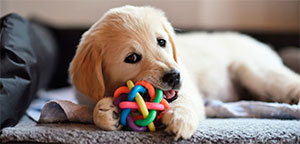 Dog with interactive toy.